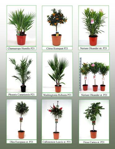 112 Werbe-CC mediterrane Pflanzen
