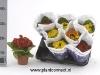 014 Calceolaria