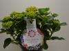 146 Gartenhortensien 21 cm