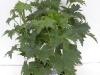 zomerplanten 19 cm pot, 9-6-2010 053