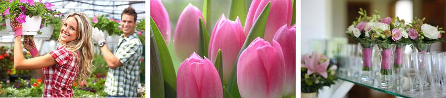 Blumen Hagedorn Kategoriebild